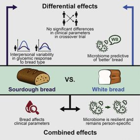 illustration of study on whole-wheat bread versus white