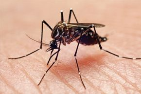 Dengue can't be spread from person to person -- only via mosquitoes that bite an infected person and then go on to bite a healthy person.