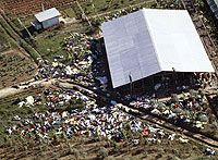900 dead bodies at The People's Temple compound in Jonestown, Guyana