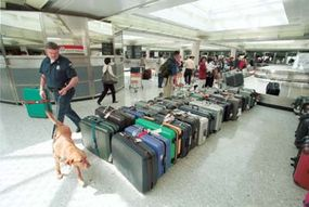 Customs inspectors use specially trained dogs to sniff out drugs and other contraband.