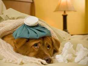 Your dog might be a hypochondriac, but at least he doesn't have Internet access. See more mental disorder pictures.