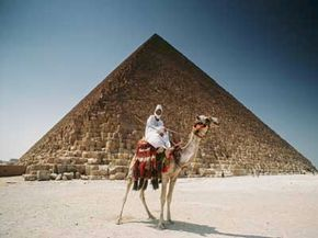 During short trips, camels can carry heavier loads than what elephants can haul. See more pictures of mammals.
