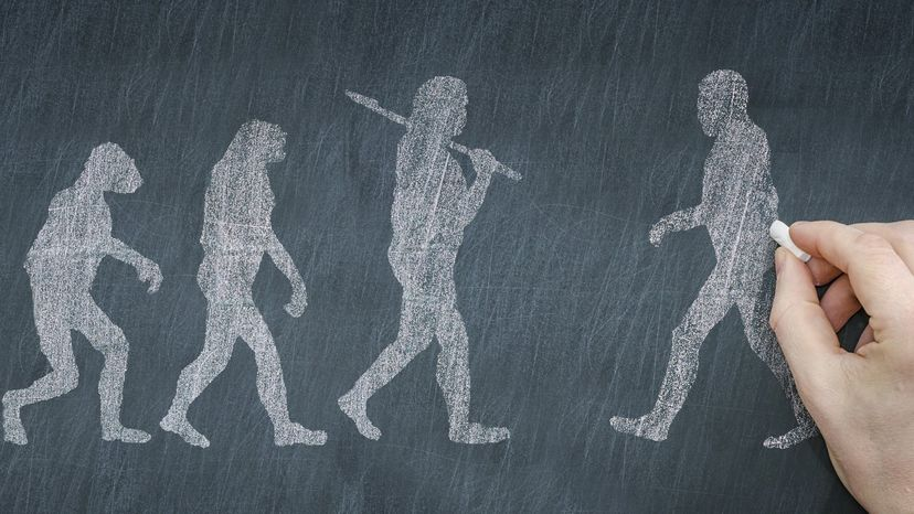Drawing of our evolution