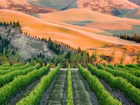 New Zealand's Canterbury wine region is one of the world's most picturesque wine settings. See our collection of wine pictures. 