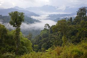 Carbon offsets help reduce the global greenhouse gas total by funding projects like reforestation in Ecuador.