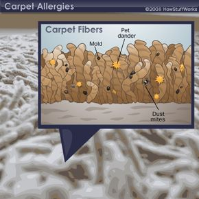 Ugh. Who wants to think about all these allergens hanging out in your carpet?