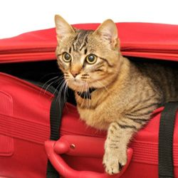 Your kitty needs something to carry all of her stuff on vacation, just as you do.