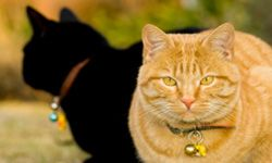 Make sure your kitty has a collar with all of his identification attached before you leave.