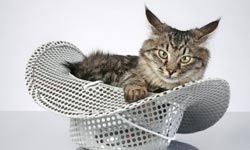 It's not known how Maine Coons originated but they're native to the state of Maine.