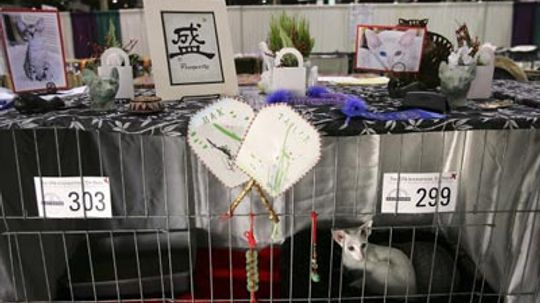All About Cat Shows