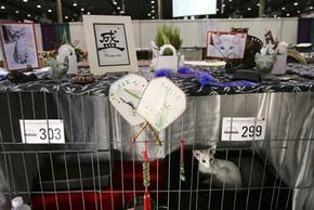 The owner of this oriental shorthair cat has added personalized flair to its cage at the CFA's International Cat Show.