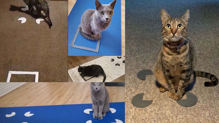 cat in square