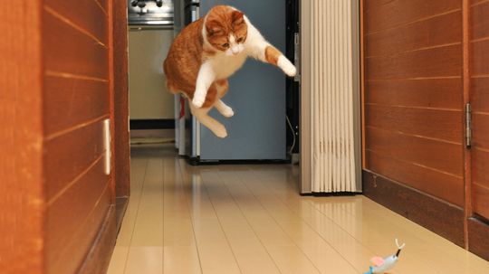 The Science Behind Your Cat's Catnip Craze