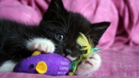 How does catnip work?