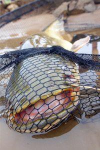 Fishing. Big cat Fish!