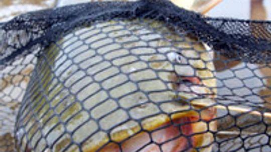 Top 4 Catfishing Techniques