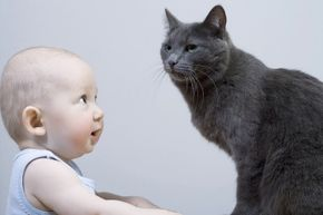Cats get a bad rap. Yes, you need to keep an eye on them around babies, but no more than any other animal. (Actually, less than most others.)