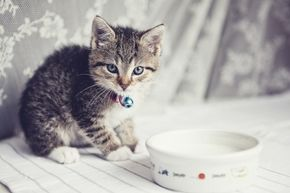 The image of kittens piling around a bowl of milk is widespread, but really milk can pose some digestive issues for kitty and it isn't all that nutritious for them either.