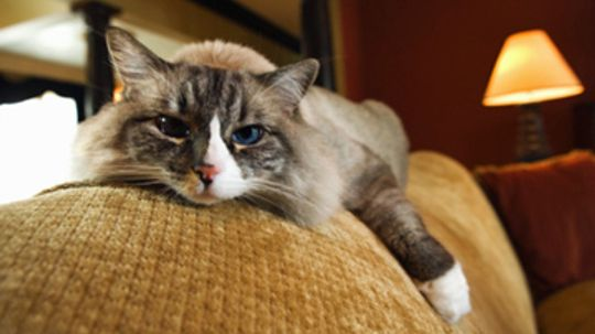 Should cats be kept exclusively indoors?
