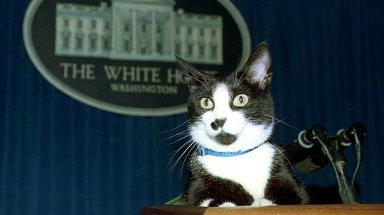 10 Cats Who Made History