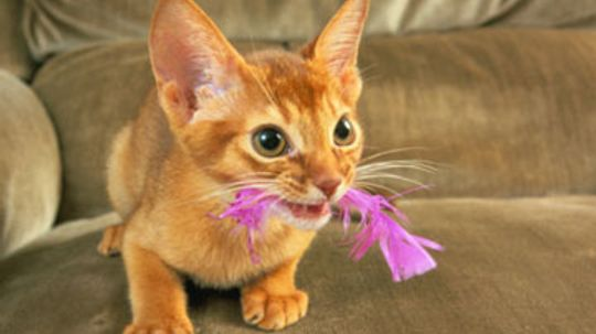 Home Remedies for Cats with Ear Mites