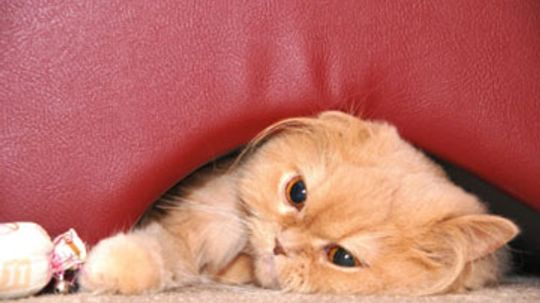 Home Remedies for Cats with Hairballs