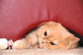 """Did your long-haired cat leave you a nasty hairball """"present?"""" See more cat pictures."""