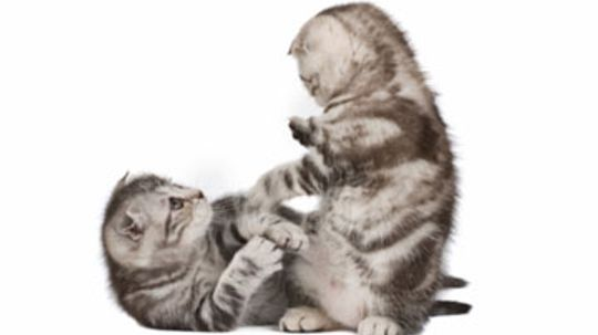 Home Remedies for Cats with Scrapes and Scratches