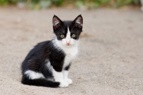 This cute little stray kitten probably has worms. See more cat pictures.
