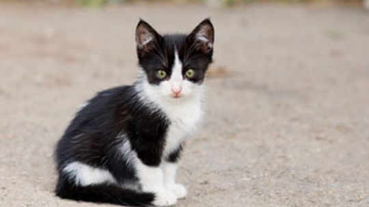 Home Remedies for Cats with Worms