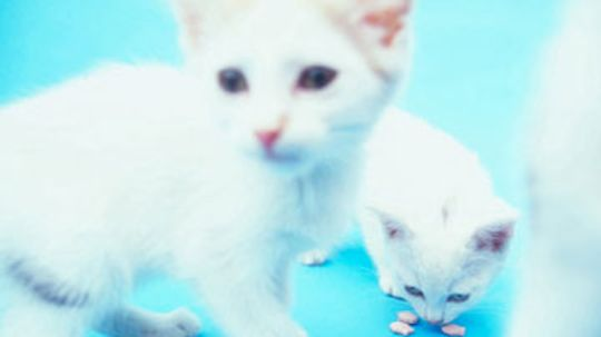 Home Remedies for Cats With Hearing or Vision Loss