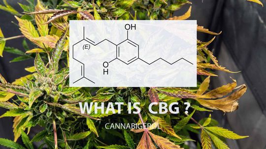 What to Know About CBG, the Mother of All Cannabinoids