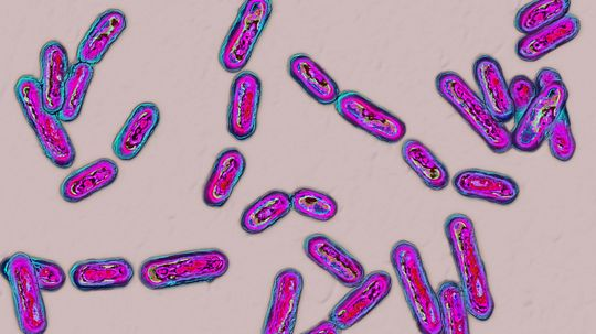 Fecal Transplants: There's a Pill for That