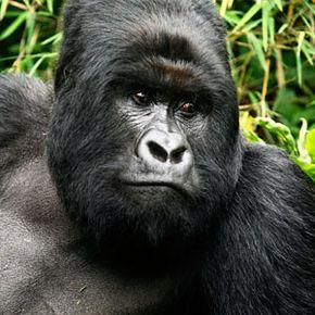 Fossey was murdered in the bedroom of her cabin on Dec. 26, 1985.