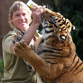 Irwin died in 2006 after being fatally pierced in the chest by a stingray barb.