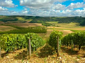 The Champagne region of France is one of the most heavily praised wine regions on Earth. See our collection of wine pictures.