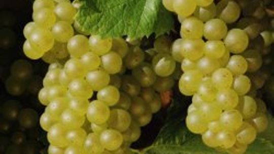 How to Prune Grape Vines