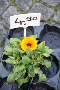 As the weather cools, plant prices drop.
