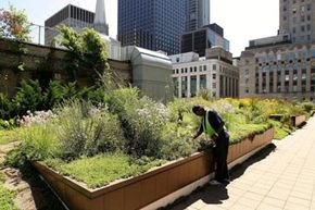 Green Living Image Gallery Groundskeeper Donald Braboy works atop Chicago City Hall's rooftop garden in Chicago, Illinois. The garden sits on the top of the 11-story city hall building and was first planted in 2000. Pictures of green living.