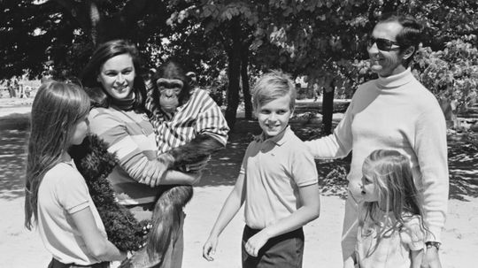 5 Chimps Who Grew Up in Human Families