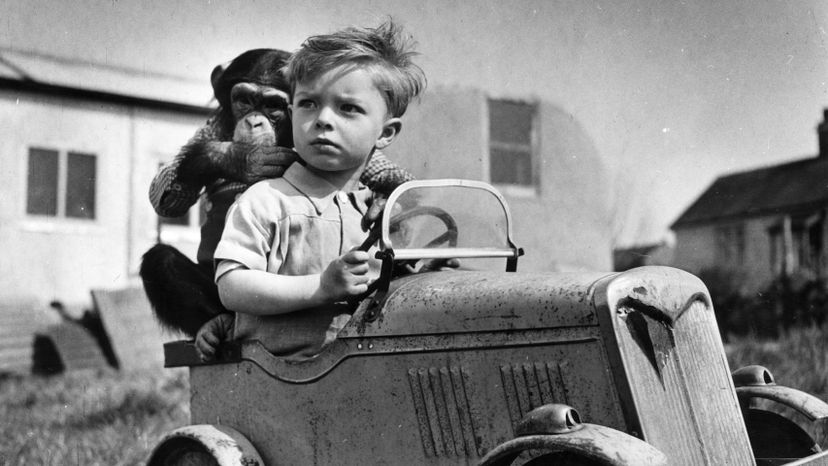 Baron, chimp, Detroy