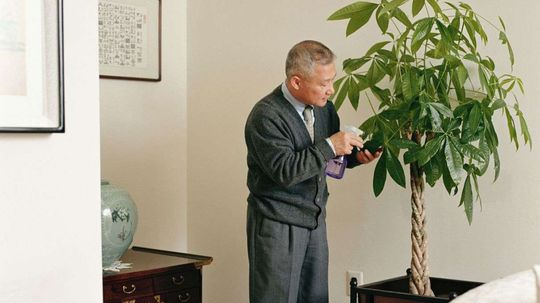 Why Do People Give Money Trees at Lunar New Year?