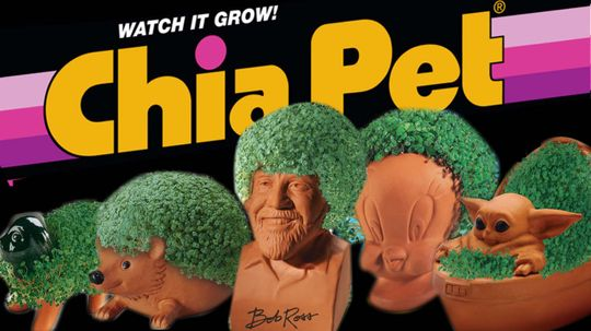 Ch-Ch-Ch-Chia! You Know the Jingle, Now Hear the Chia Pet Story