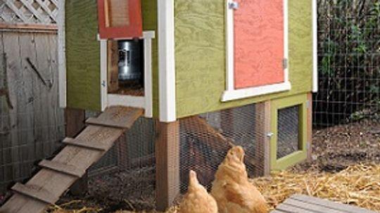 5 Interesting Chicken Coop Plans