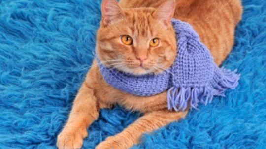 Free Scarf Knitting Patterns