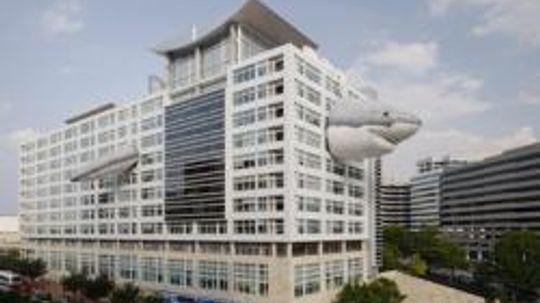 """Shark Week"" at Discovery Headquarters: Chompie Image Gallery"