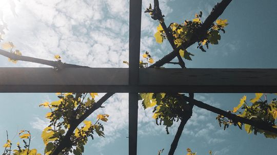 How to Choose the Best Trellis for Your Garden