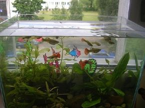 Technical know-how increases your chance of a successful aquarium. See more aquarium fish pictures.