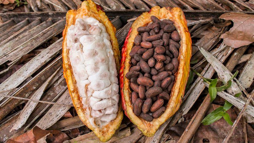cocoa beans