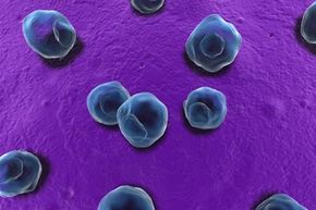 Under a microscope, chlamydia cells may not seem dangerous. But in a woman's body, alone, they can damage the fallopian tubes and may lead to pelvic inflammatory disorder (PID).